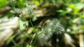 Kwiat w naturze Zdjęcie Stock