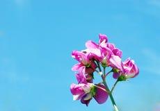 Kwiat w niebie Obrazy Royalty Free