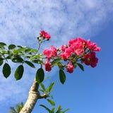 Kwiat w niebie Zdjęcia Stock