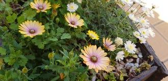 Kwiat w ogródzie Zdjęcia Royalty Free
