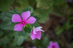 Kwiat w ogródzie obraz stock