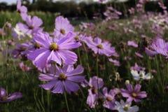 Kwiat w ogródzie Obrazy Royalty Free