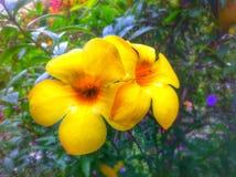 Kwiat w ogródzie Obraz Royalty Free