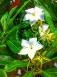 Kwiat w ogródzie Zdjęcie Royalty Free