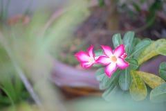 Kwiat w ogródzie Zdjęcia Stock