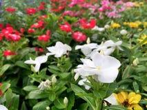 Kwiat w parku Zdjęcia Stock