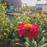 Kwiat w parku Zdjęcia Royalty Free