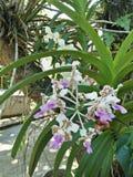 Kwiat w podwórku obraz royalty free