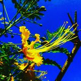 Kwiat wśród nieba zdjęcia stock