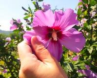 Kwiat w ręce Fotografia Stock