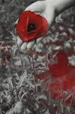 Kwiat w ręce Zdjęcia Stock