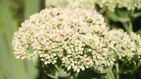 Kwiat w ranku Obraz Stock