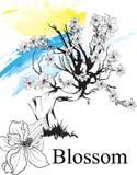 kwiat?w rysunki Nakreślenie Czereśniowy okwitnięcie lub Sakura rysujący z sztuką na białych tło ręcznie Wektorowa nakre?lenie szt ilustracji