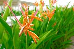 Kwiat w rzędzie Obraz Royalty Free