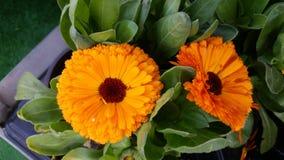 Kwiat w sklepie Fotografia Stock
