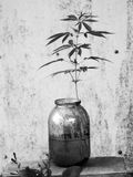 Kwiat w szklanym słoju Zdjęcia Stock