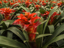 Kwiat w szklarni Zdjęcie Stock