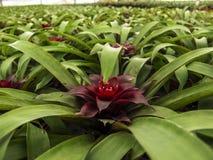 Kwiat w szklarni Obraz Stock