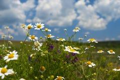 kwiat w terenie Zdjęcie Stock