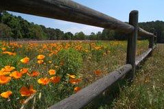 kwiat w terenie Obraz Royalty Free