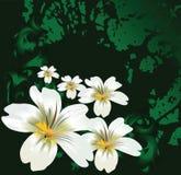 kwiat w terenie Obrazy Royalty Free