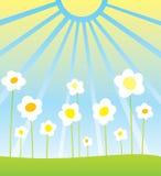 kwiat w terenie ilustracji