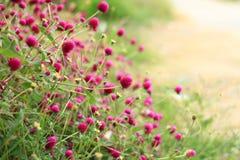 Kwiat w wiejskiej drodze Fotografia Stock