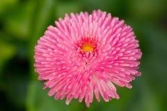 Kwiat w wiośnie Zdjęcie Royalty Free
