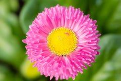 Kwiat w wiośnie Zdjęcia Stock