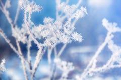 Kwiat w zimie z zamarzniętymi lodowymi kryształami Pięknej zimy sezonowy naturalny tło Styczeń 33c krajobrazu Rosji zima ural tem zdjęcie stock