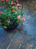 kwiat waza Obrazy Stock
