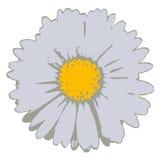 kwiat wektora Fotografia Royalty Free