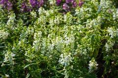 kwiat white wzoru Fotografia Royalty Free