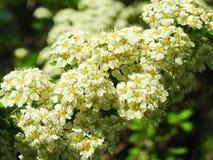 kwiat white wzoru Zdjęcie Stock