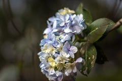 Kwiat wiązki błękit i biel obraz stock