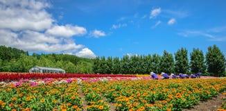 kwiat wiśni tła kwitnie niebo białe Fotografia Stock