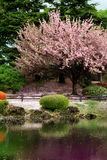 kwiat wiśni wyraźny wspaniałe drzewo Zdjęcia Stock