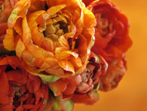 kwiat światła playnig tło Obraz Stock