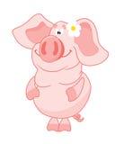 kwiat świnia Zdjęcia Stock