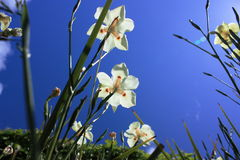 kwiat wiosna zdjęcie royalty free