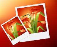 kwiat wiosna Fotografia Royalty Free