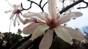 kwiat wiosny leśny white Obrazy Stock