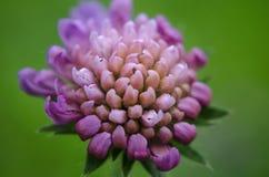 kwiat wiosny leśny white Obraz Royalty Free