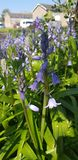 kwiat wiosny le?ny white obrazy royalty free