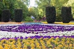 Kwiat wiosny plenerowy parkowy piękno Fotografia Royalty Free