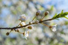 Kwiat wiosny rośliny ulotek makro- bokeh Fotografia Royalty Free