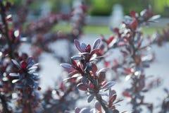 Kwiat wiosny rośliny ulotek makro- bokeh Fotografia Stock