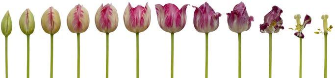 kwiat wychodzi Zdjęcie Stock