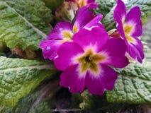 Kwiat wysoka ziemia zdjęcie stock