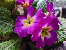 Kwiat wysoka ziemia obrazy stock